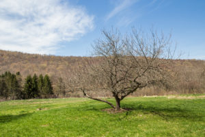 Milkweed Barn, Converted Barn, views, field, trees, nicole vidor, real estate, realtor