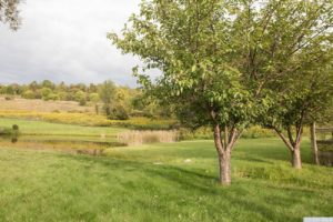 country farmhouse, outside, optional cottage, views, pond, mature trees, for rent, nicole vidor, real estate, realtor